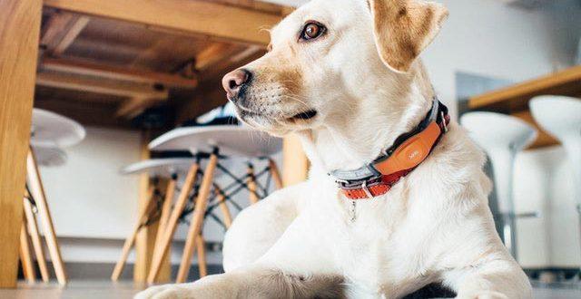 GPS трекер для собак