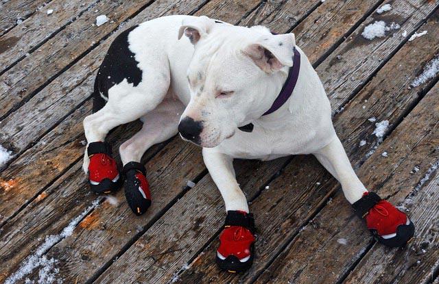 Собака в красовках