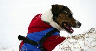Собака зимой уход