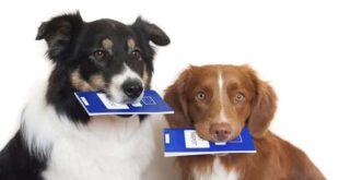 Документы для собак