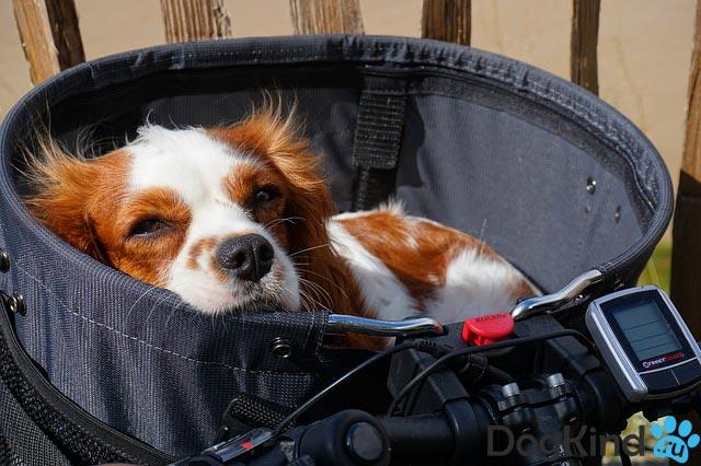 Переноска для собаки на руль велосипеда