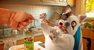 Лакомства для собаки
