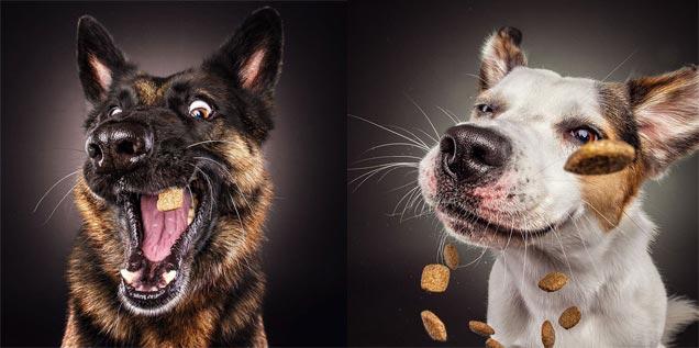 Сухарики для собаки