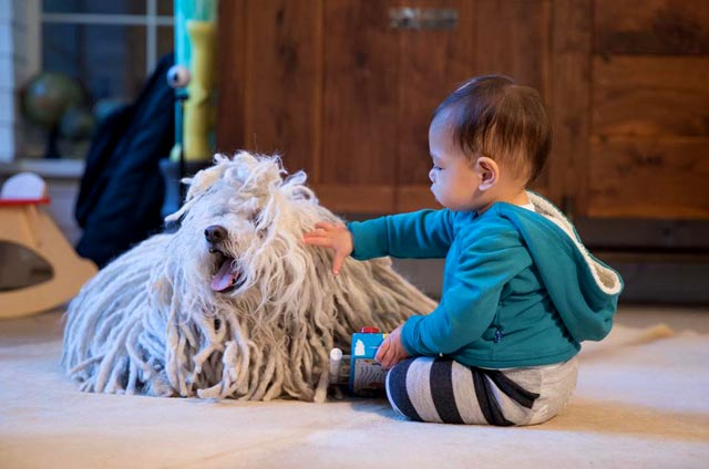 Ребенок и собака Марка Цукерберга