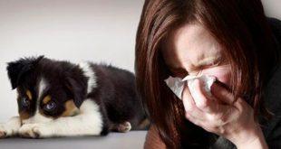 Аллергия на шерсть собак