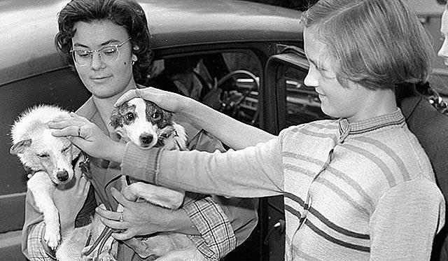 Белка и стрелка – собаки космонавты