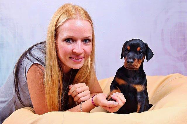 Доберман щенок