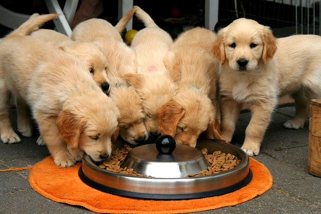 Сухой корм для щенков