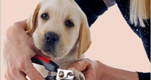 Подстричь когти собаке правильно