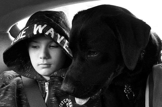 Агрессия собаки к ребенку.