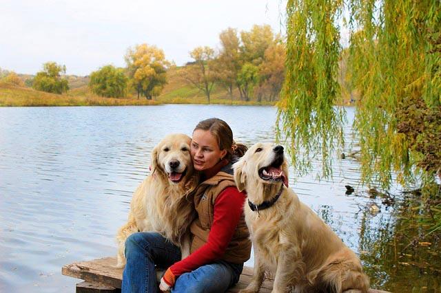 Миф о разведение собак