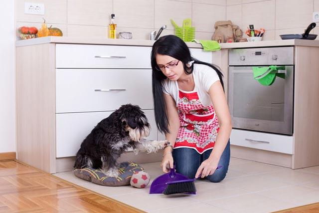 Чистый пол для собак