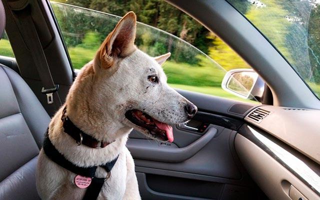 Собака заперта в машине
