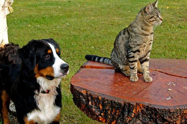 Собака с котом