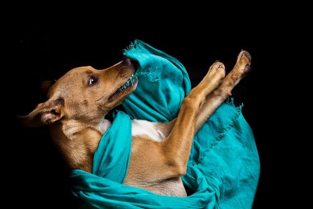 Собака портит одежду