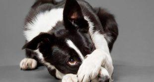 Собака виновата
