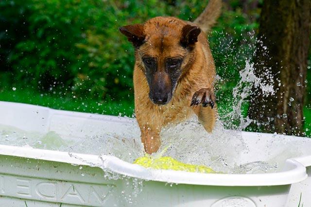 Собака моет лапы