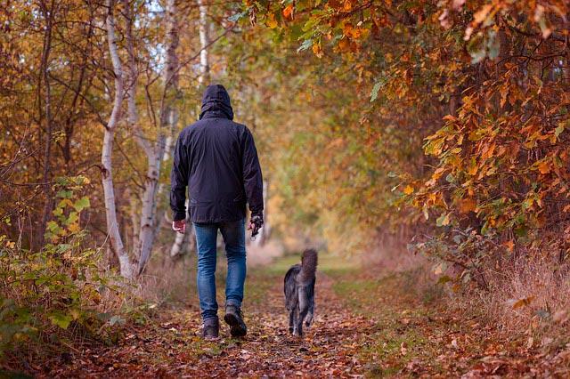 Собака убегает на прогулке