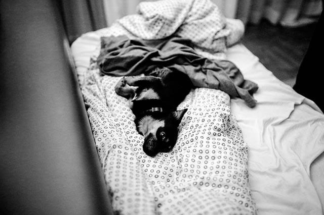 Собака спит на кровати