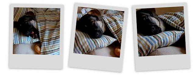Собака спит на диване