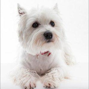 Собака изменение цвета шерсти