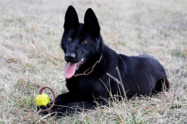 Собака и игрушка
