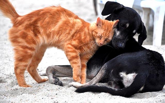 Кошка с собакой фото
