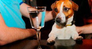 Можно ли собаке дать алкоголь