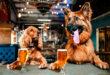 Алькоголь вреден для собак