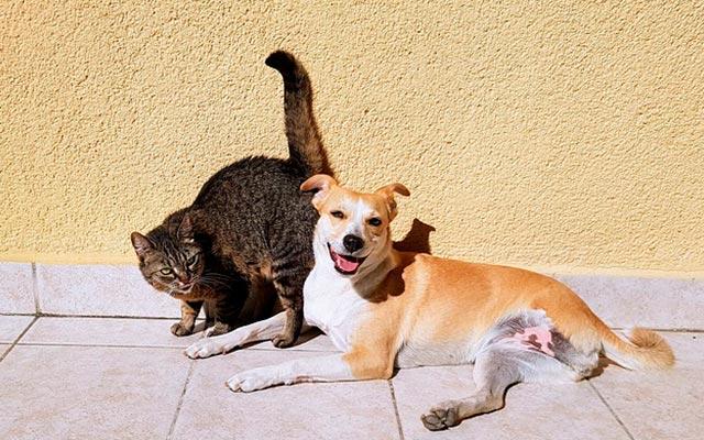 Собака кот фото
