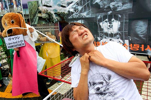 Молодёжь Кореи против убийства собак