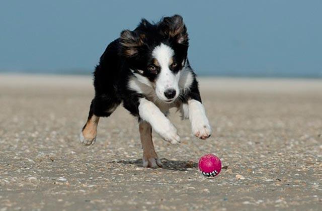 Игрушка мячик для щенка