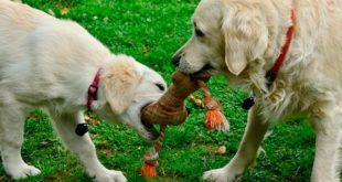 Как выбрать игрушку собаке