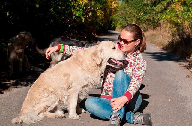 Профилактика колтунов у собак