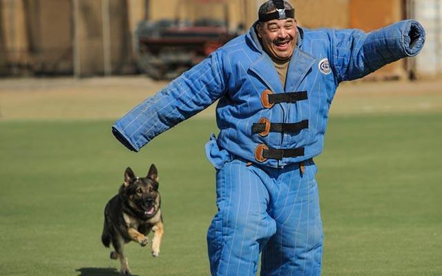 Задержание фигуранта собакой