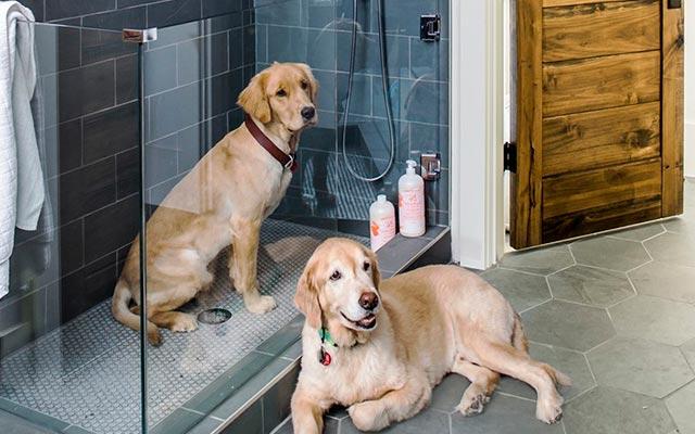 Собаки в душевой кабине