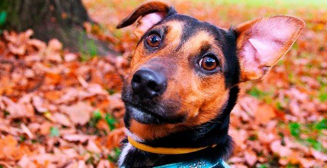 Кто лучше: породистые собаки или дворняги?