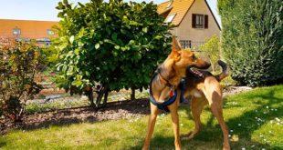 Как защитить дом и сад от собак
