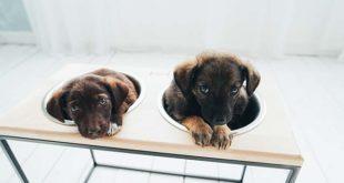 Подставка для собачьих мисок