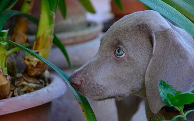 Что делать, если собака грызёт растения