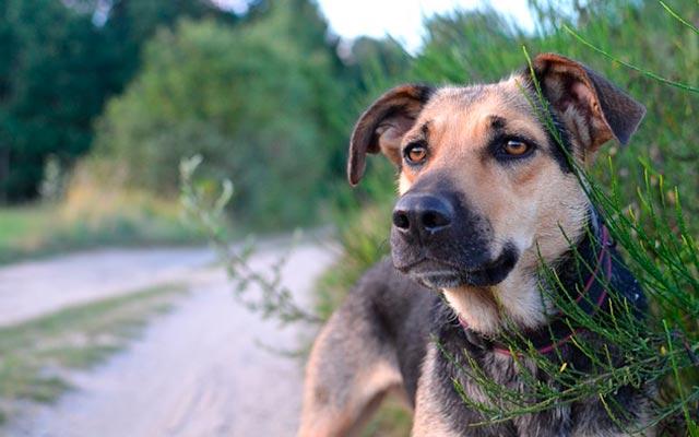 Собака гибрид фото