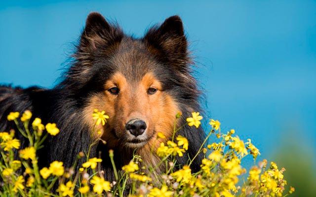 Уход за собакой весной