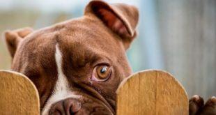 Собака перелезает через забор