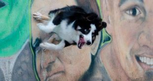 50 интересных фактов о собаках