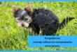 копрофагия, почему собака ест экскременты