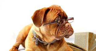 собачий интеллект