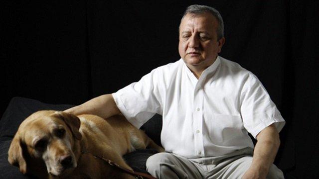 Самая преданная собака - лабрадор Дорадо