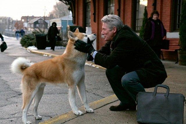 Изображение - Самая верная собака Хатико