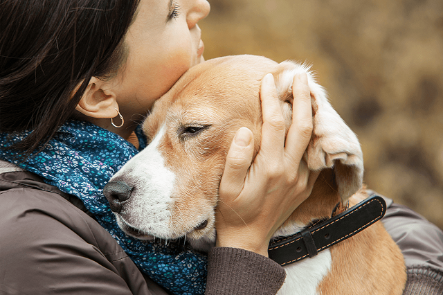 Изображение - Самые преданные собаки