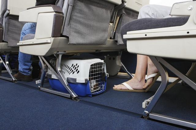 Перевозка собак в самолете в сумке переноске